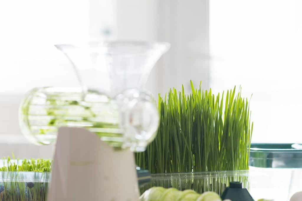 what is the best masticating juicer for wheat grass