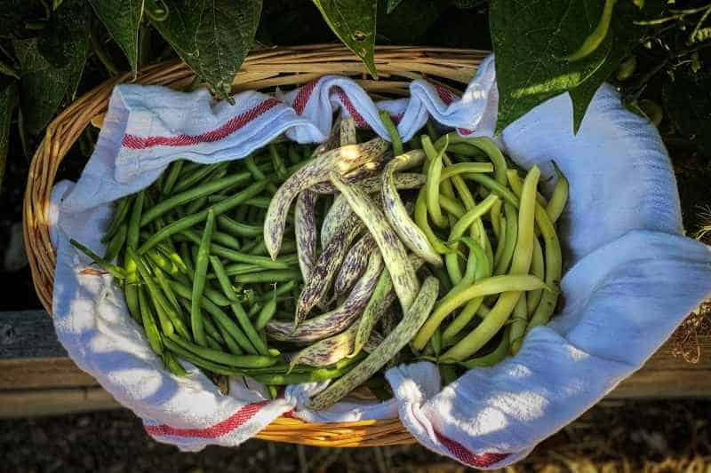mixed green beans in a basket