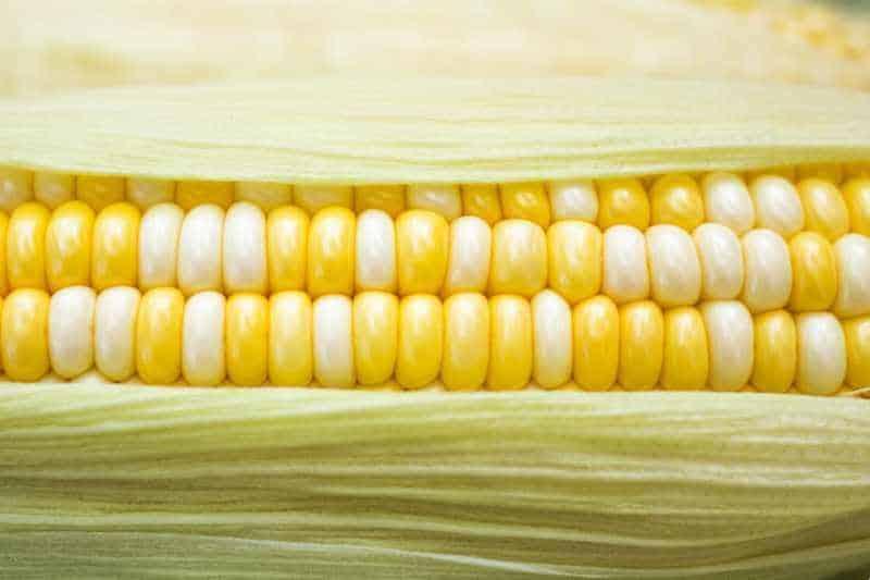 close up of raw corn